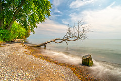 Waves and Trees (Faron Dillon) Tags: water lakeontario oshawa ontario trees waves sony a7riii 1740 stump ndfilter blackglass longexposure beach tree pebbles colors