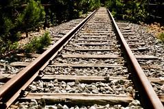 Lungo i binari (michele.palombi) Tags: parallellismi film35mm analogic calabria sila ferrovia