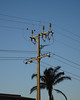 Standing Tall (mikecogh) Tags: peterhead telegraphpole stobiepole palmtree electricity distribution wires