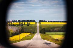 Rural Alberta in Side Mirror (Bracus Triticum) Tags: rural alberta side mirror アルバータ州 canada カナダ 7月 七月 文月 shichigatsu fumizuki bookmonth 2019 reiwa summer july