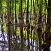 Why Do We Destroy What Is So Amazing Around Us? (Congaree National Park)