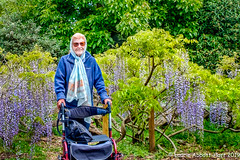 20190516Mom Amongst the Wisteria 27145-Edit (Laurie2123) Tags: chihuly fujixt2 kewgardens laurieabbotthart laurietakespics laurie2123 london mom reflectionsonnature vacation