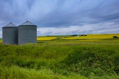 Summer Alberta Landscape (Bracus Triticum) Tags: summer alberta landscape アルバータ州 canada カナダ 7月 七月 文月 shichigatsu fumizuki bookmonth 2019 reiwa july