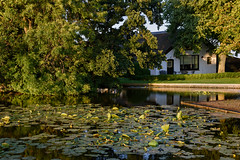 Evening in Groene Jonker (Julysha) Tags: groenejonker evening 2019 thenetherlands waterlily house summer july acr nikkor1680284 trees d7200 sunset pond