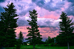 Three Colour Sunset (darletts56) Tags: sky cloud clouds white pink grey tree trees fir bush bushes field home house village dusk evening night sundown country prairie saskatchewan canada slid childrens play structure blown over fence red yellow green grass sunset blue