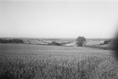 Olympus AF-1 (camera_holic) Tags: olympus af1 old retro compact camera 35mm point shoot 80s black white expired ilford hp5 plus gloucestershire landscape uk england rural countryside hawkesbury upton cotswolds cotswold way path bath lane track field crop crops