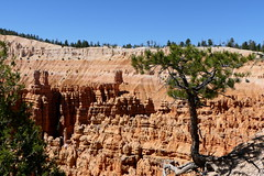 At the abyss (ivlys) Tags: usa utah brycecanyon baum tree wurzeln roots kiefer pine abgrund abyss landschaft landscape natur nature ivlys