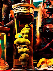 Ephydatia Fluviatills (Steve Taylor (Photography)) Tags: ephydatiafluviatilis feather specimen shell jar digitalart sculpture carving colourful wooden uk gb england greatbritain unitedkingdom london viktorwyndmuseum