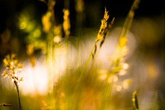 Sunlit meadow (tonguedevil) Tags: outdoor outside countryside summer nature field meadow grass light shadows sunlight colour