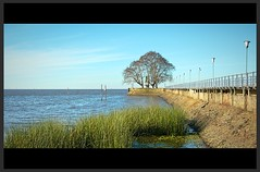 P1080976_Fotor (juliofeliu) Tags: olivos puerto paisaje landscape tree
