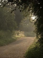 En chemin **--- °-° (Titole) Tags: path titole nicolefaton misty mist thechallengefactory unanimouswinner friendlychallenges challengeyouwinner