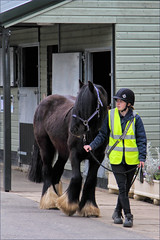 Turnout for Star (meniscuslens) Tags: rescue pony horse trust charity groom stable princes risborough high wycombe aylesbury buckinghamshire