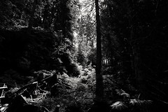 in the enchanted forest (silviasalvi) Tags: mountain alpi wood foresta forest nature magic shadowsandlights light chiaroscuro controluce backlight italy fujifilmxe2 dream dolomiti latemar blackandwhite fairytale darkness