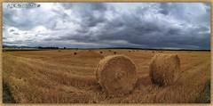 Elles arrivent en nombre..fuyez !!!! (jamesreed68) Tags: meule foin alsace wattwiller paysage nature hautrhin grandest 68 france ciel nuages
