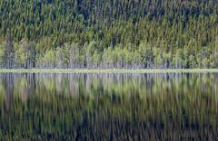 Skrukkelisjøen, Norway, June 26, 2019 (Ulf Bodin) Tags: skog birch calm serene reflection spegling outdoor lake norway summer tree skrukkelisjøen norge träd canonef100400mmf4556lisiiusm landscape björk forest canoneosr sjö mountain hurdal akershusfylke