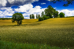 Tleń (Andrzej Kocot) Tags: andrzejkocot art adventure landscape landscapes creative clouds colors countryside colorful sky surreallandscape surreal fineart olympus omd outdoor poland polska
