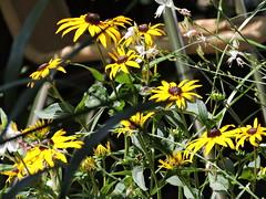 DSCN0111 (keepps) Tags: switzerland suisse schweiz vaud lausanne summer flower