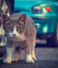 Il grigio (Pepenera) Tags: gatto gato gatti cat cats portrait photography fotografia foto selfportrait ritratto
