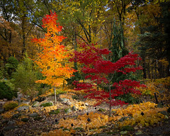 Fall Colors (Bruce Bugbee) Tags: onsted michigan unitedstates fall colors red yellow trees autumn