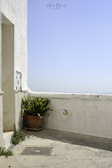 ostuni #4 (Marco Buccelli) Tags: ostuni puglia difrontealmare onthewaterfront pianta estate plant sunshine soleggiato vaso cieloazzurro bluesky pureambiance soothing refreshing findingoneself backtotheroots zentography beautifulday
