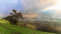 Morning Glory DSC_8894 (BlueberryAsh) Tags: fog morning weather country countryvictoria tree farm paddock mist cloudsstormssunsetssunrises clouds sunrise sunshine cold australia landscape nikond750 nikon24120