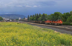 Up The Pass (GLC 392) Tags: storm clouds dark grey green orange yellow mrl montana rail link lm emd sd70ace ge es44ac livingston mt coal train railroad railway 8425 6201 8556 tree trees mountain mountains
