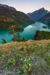 Morning At The Diablo Lake Overlook (rebeccalatsonphotography) Tags: rosslake nationalrecreationarea diablolake lake glacierflour turquoise mountains wa washington washingtonstate northcascades canon 5ds 1635mm wideangle morning rebeccalatsonphotography