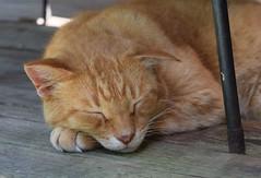 Stewart J Cat (jmunt) Tags: stewartjcat cat