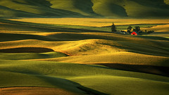 Palouse Hills at Sunrise (asosyalhaber) Tags: statepark hills palouse steptoebutte morning light shadow summer usa house abstract washington curves agricultural palousehills field farmhouse barn countryside farm background farming farmland agriculture curved desolate distant countrylife builtstructure nature rural landscape outdoors hill rustic shed scenic ground pasture land remote silos shack hilly rurallife wooden sunny warmtone
