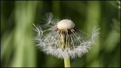 _SG_2019_06_3026_IMG_5014 (_SG_) Tags: blume blumen flower flowers blumenwiese blumenfeld meadow wildflower wildflowermeadow