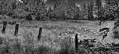 Fence line in the Sierra Madre foothills: HFF! (+1) (peggyhr) Tags: peggyhr fence goatsbeard grass couds sky summer travel california usa bw trees dedication img3076ax gestaltgroup