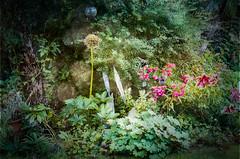 Overgrown (judy dean) Tags: judydean 2019 garden texture ps plants flowers appletree