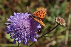 Butterfly (Hugo von Schreck) Tags: hugovonschreck butterfly schmetterling macro makro insect insekt canoneosm50 tamronsp90mmf28divcusdmacro11f017