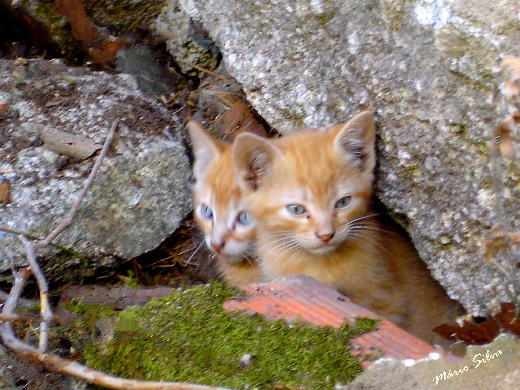 Águas Frias (Chaves) - ... os gatitos ...