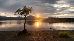 Lucky Lomond (http://www.richardfoxphotography.com) Tags: milarrochybayv tree loch lochlomond sunset thetrossachs scotland scottishhighlands