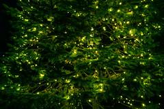 Decoration on green tree with small lights (jack-sooksan) Tags: green tree branch light shine bright decoration ornament twig limb blazing gleam lighting outdoor glow glowing night dark design plant illuminate illumination