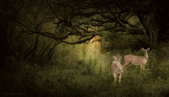 La Forêt Enchantée (JDS Fine Art Photography) Tags: deer baby babydeer forest woods landscape dreamy enchanted magical nature beauty naturesbeauty life naturalbeauty green inspirational animals