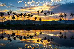 NAT09737 (Mr.Saengphon) Tags: sunrise cloud golden mountain water reflection sun landscape light nantou nantoucity betelnut sony alpha a7iii metabones ef1635f4lisusm