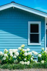 Hydrangea House (Graham Gibson) Tags: santa cruz a7rii sony fe vacation