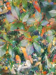 Fall is in the Air (style of Gustav Klimt) (Carol (vanhookc)) Tags: digitalprocessing digitalediting digitalart deepdreamgenerator