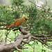 IMG_6464_PL - Chine - oiseau de la Montagne Jaune (Huangshan)