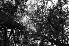 Fouillis (Atreides59) Tags: lyon rhone arbre tree arbres trees nature pentax france k30 k 30 pentaxart atreides atreides59 cedriclafrance noir blanc nb noiretblanc black white bw blackandwhite