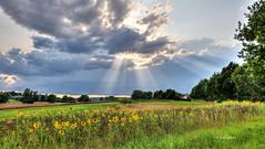 kurz vor dem Gewitter (petra.foto busy busy busy) Tags: himmel wolken sonnenstrahlen gewitter natur sonnenblumen landwirtschaft schleswigholstein fotopetra sommer outside canon eosrp