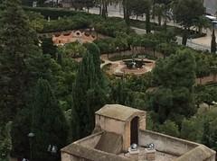 IMG_2329 (rugby#9) Tags: malaga spain andalucia costadelsol alcazaba alcazabademalaga tree trees palmtrees palmtree jardinesdepedroluisalonso