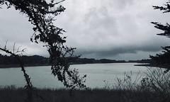 #LakeMerced #theLake #SanFrancisco (Σταύρος) Tags: cold windy overcast walk walking cardio exercise lakemerced thelake sanfrancisco sf city sfist thecity санфранциско sãofrancisco saofrancisco サンフランシスコ 샌프란시스코 聖弗朗西斯科 norcal cali سانفرانسيسكو kalifornien californië kalifornia καλιφόρνια カリフォルニア州 캘리포니아 주 californie california northerncalifornia カリフォルニア 加州 калифорния แคลิฟอร์เนีย كاليفورنيا lake 湖 meer lac see λίμνη 호수 innsjø озеро sjö llyn echibi freshwaterlake tpc hardingpark park lm pacificrowingclub lagunadenuestraseñoradelamerced laguna rowingclub westlakevillage lakeshore parkmerced tpchardingpark 1963