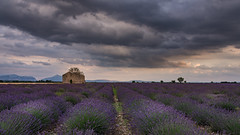 idyllic lavender field (hjuengst) Tags: provence hauteprovence valensole lavender lavendel clouds cloudy wolken wolkig sunset