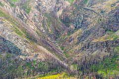 Waterton National Park, 2 years after the big forest fire (dwb838) Tags: nationalpark mountains waterton landscape trees