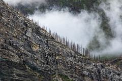 Waterton National Park, 2 years after the big forest fire (dwb838) Tags: nationalpark mountains waterton 2yearspostfire landscape mist trees clouds