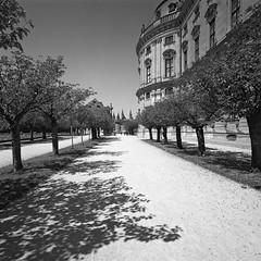 Hofgarten (JK-SW) Tags: würzburg franken unterfranken bayern deutschland hofgarten resitenz blackwhite 6x6 hc110