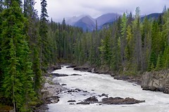 Invitation to Explore (brucecarlson66) Tags: rocky mountain canada tree green cloud water stream river rock nature landscape kicking horse canadian rockies spine fir forest heavenly portal glorious beautiful quiet serene pristine untouched invitation explore